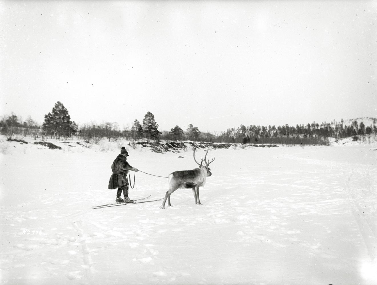 Johan Turi tolkar efter ren år 1914.